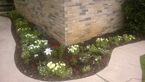 Milestone Church Springtime front yard project flowers