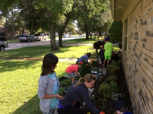 landscaping planting flowers 2