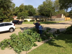 Landscaping triming trees 2